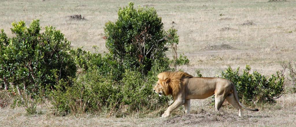Group Safari Mombasa | African Memorable Safaris